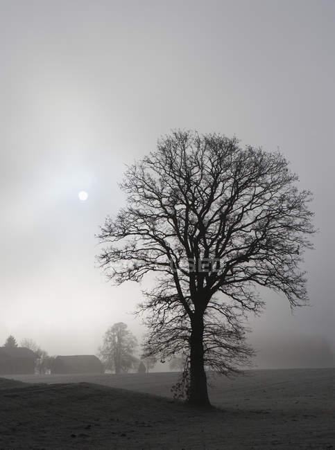Австрия, Озил, Ферма осенью при туманной погоде — стоковое фото