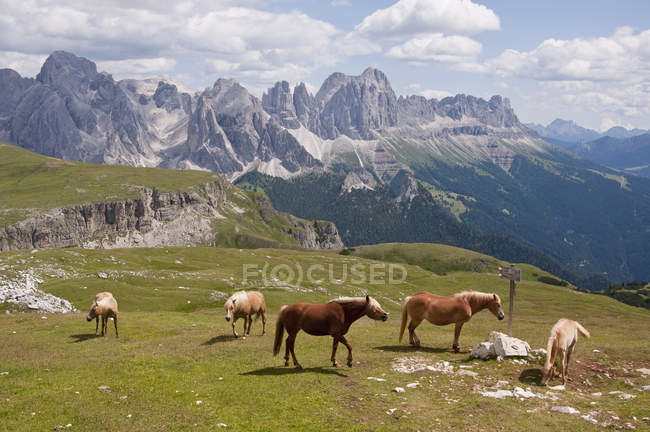 Horses grazing in meadow — Stock Photo