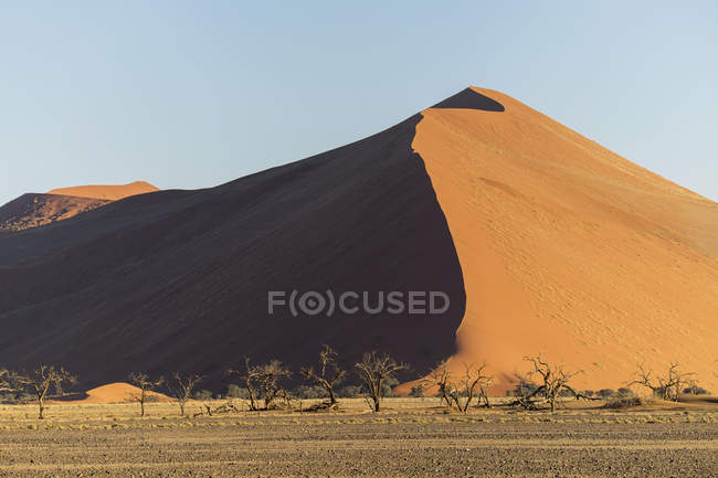 Africa, Namibia,  Sossusvlei, Trees and sand dunes at sunset — Stock Photo