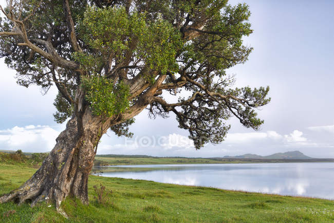 New Zealand, Chatham Island, Tree at shore — Stock Photo