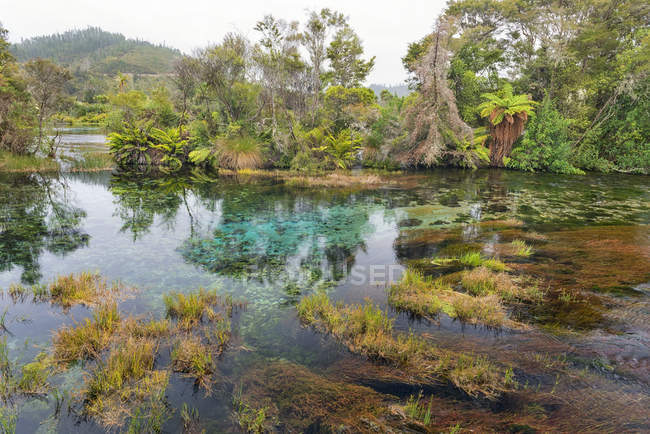 New Zealand, Tasman, Takaka, Te Waikoropupu Springs with vegetation around the freshwater pool — Stock Photo