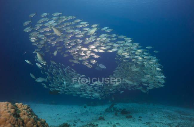 Shoal de peces en el agua de mar durante el día - foto de stock