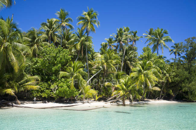 Micronesia, Palau, Peleliu, lagoon with palm-lined beach — Stock Photo