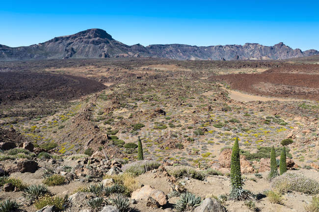 Національний парк Тейде подання в денний час, Тенеріфе, Канарські острови, Іспанія — стокове фото