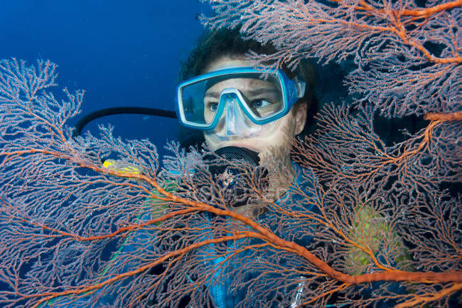 Australia, Great Barrier Reef, Diver behind sea fans — Stock Photo