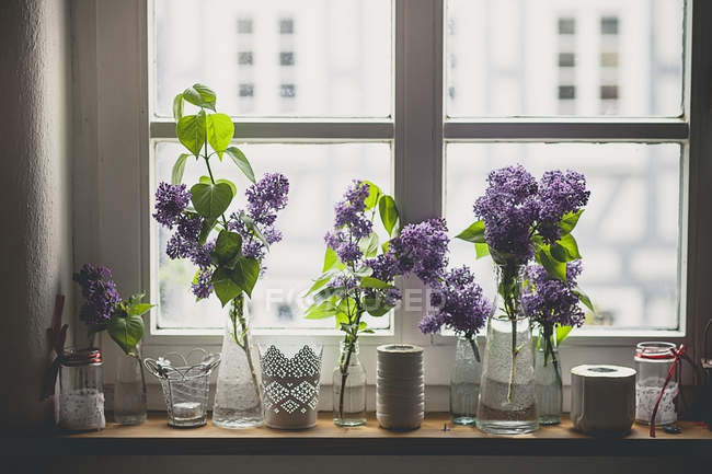 Row of different vases with lilac, Syringa, on window sill — Stock Photo