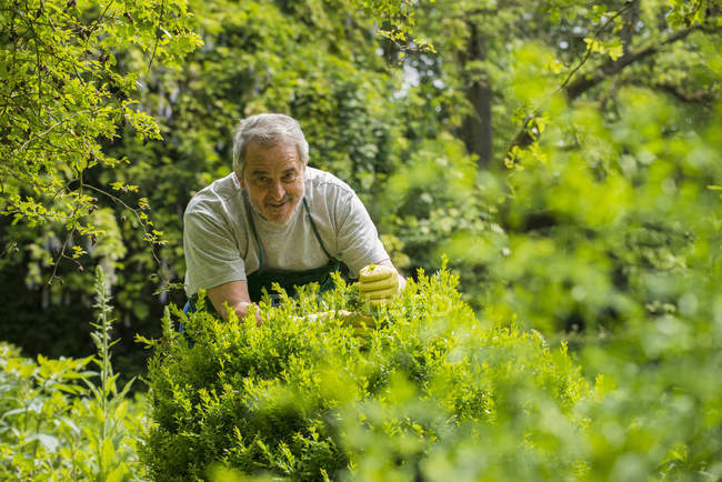 Senior gardener at work — Stock Photo