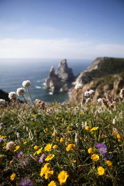 Portugal, Sintra, Praia da Ursa, flores na costa durante o dia — Fotografia de Stock