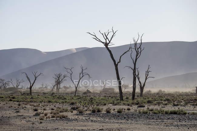 África, Namíbia, Sossus Vlei, árvores mortas na frente de dunas do deserto e tempestade de areia — Fotografia de Stock
