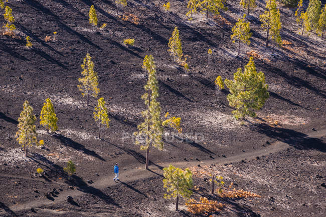 Spain, Canary Islands, Tenerife, Mirador de Chio, Canary Island Pines, Pinus canariensis, Hiker walking on the road — Stock Photo