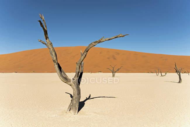 Afrique, Namibie, Sossusvlei, dune de sable, des arbres morts sur du sable — Photo de stock