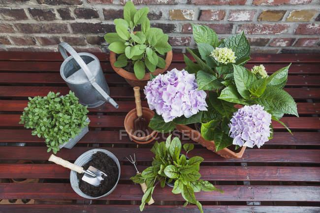 Рослини для балкона на дерев'яні поверхні — стокове фото