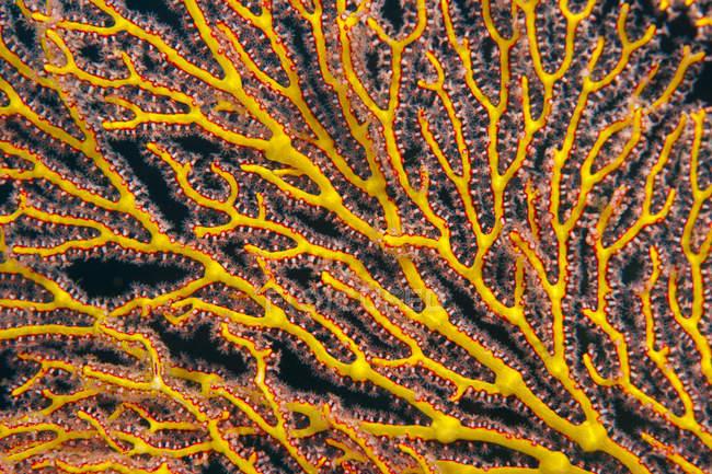 Oceania, Palau, sea fan, partial view — Stock Photo
