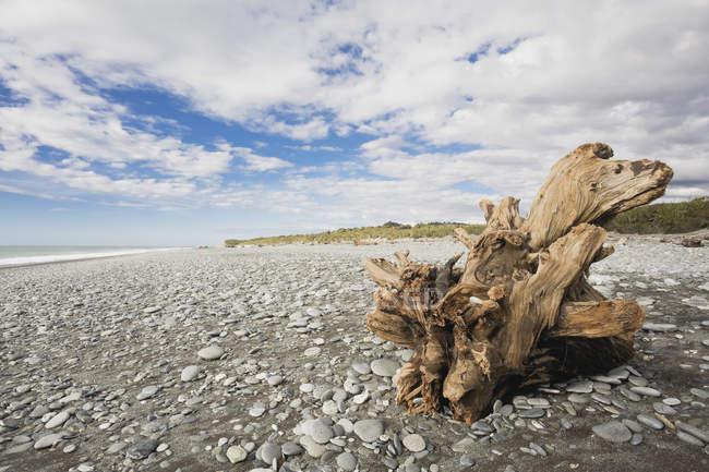 Neuseeland, Südinsel, Westküste, Goldspies-Strand, Treibholz am Strand — Stockfoto