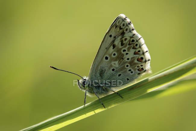 Papillon, assis sur le rameau de la plante — Photo de stock