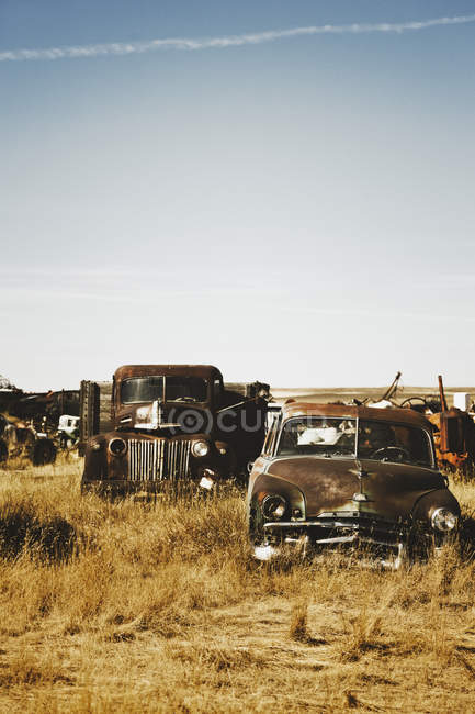 Canada, Junk yard with old US cars — Stock Photo