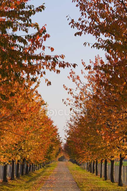 Blick auf Allee mit Laubbäumen im Herbst, Stuttgart, Baden Württemberg, Deutschland — Stockfoto