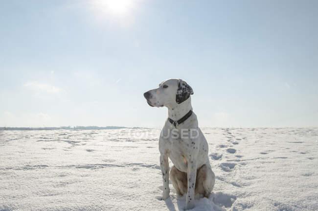 Perro de raza mixta sentado en la nieve durante el día - foto de stock