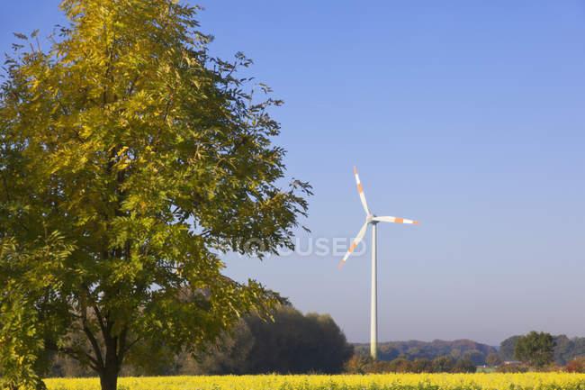 Árvores e turbinas eólicas — Fotografia de Stock