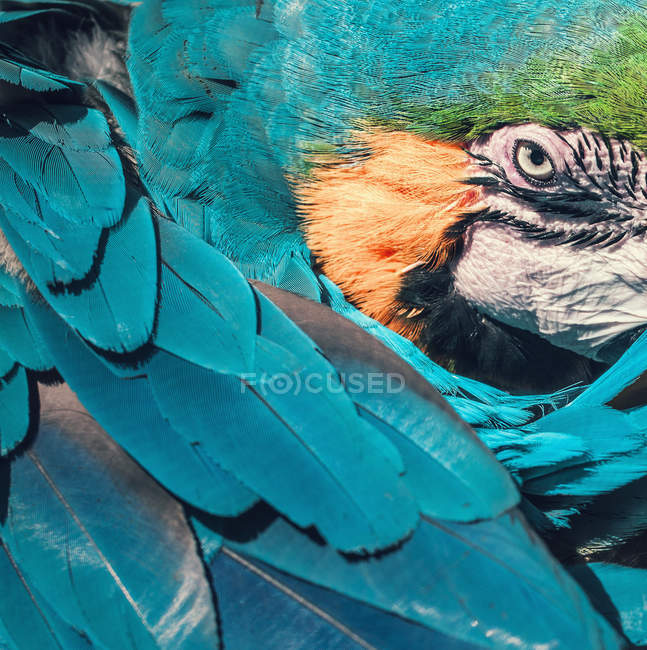 Parrot closeup partial view — Stock Photo