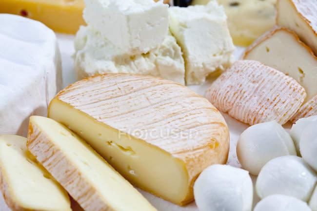Разновидности ассорти из сыров — стоковое фото