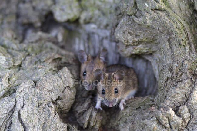Указівник на стовбур дерева — стокове фото