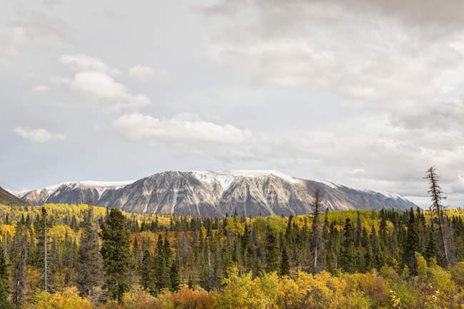 Канада, вид пейзаж с деревом и горе в дневное время — стоковое фото