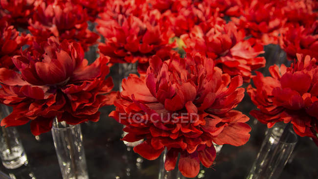 USA, California, San Francisco, Red flower deco, close up — Stock Photo