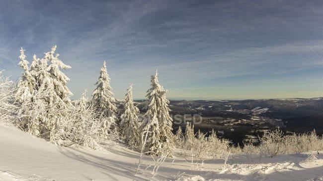 Allemagne, Bavière, vue de neige couverte d'arbres dans la forêt bavaroise — Photo de stock