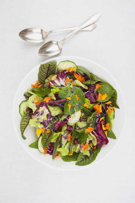 Чаша з овочевий салат — стокове фото