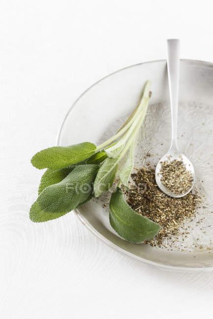 Salbeiblätter mit Löffel Gewürz — Stockfoto