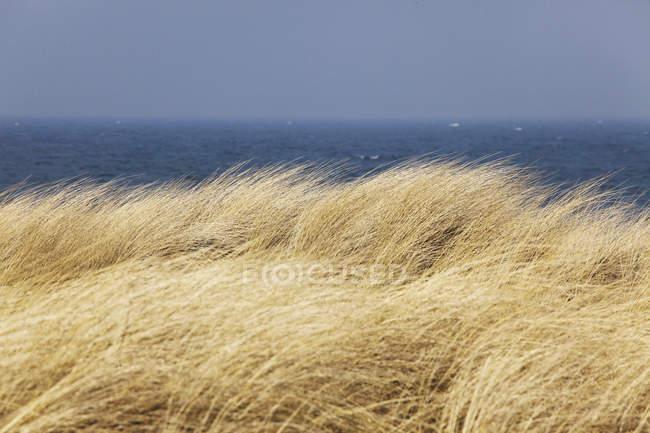 Marram траву і Балтійського моря — стокове фото