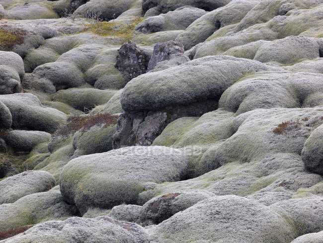 View of mossy lava fields at daytime, Iceland — Stock Photo