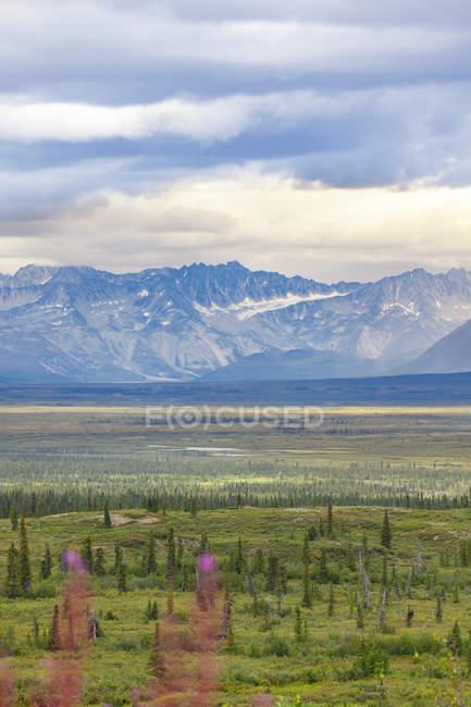 USA, Alaska, landscape at Denali Highway — Stock Photo