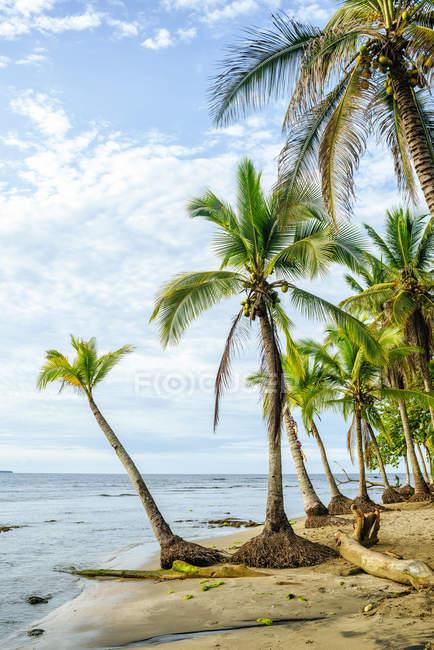 Коста-Рика, Лимон, Пуэрто-Вьехо, Чикита-Бич — стоковое фото