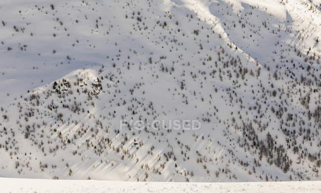 Швейцарія, Енгельін, сторона гори з скелями і деревами, що ростуть з снігу — стокове фото
