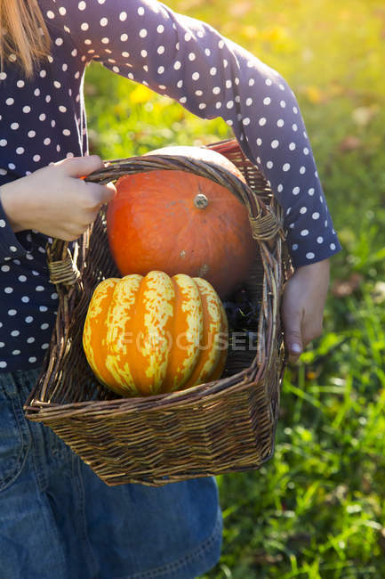 Girl carrying basket with pumpkins in autumn, partial view — Stock Photo