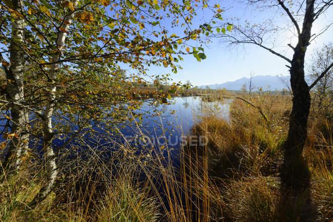 Germany, Bavaria, Upper Bavaria, Chiemgau, near Grassau, Kendlmuehlfilzen, hill moor, nature reserve, renaturated area — Stock Photo