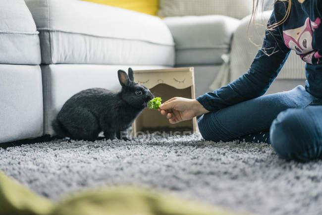 Girl feeding hare in living room — стоковое фото