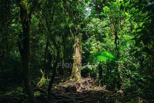 Costa Rica, Landscape with illuminated tree on the path to Cerro Chato volcano — Fotografia de Stock