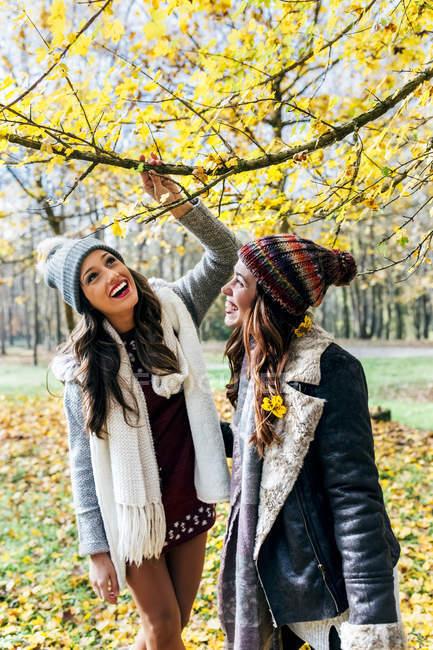 Duas mulheres bonitas se divertindo em uma floresta outonal — Fotografia de Stock