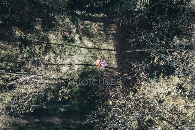 Veduta aerea di due donne sulla coperta in una radura foresta autunnale — Foto stock