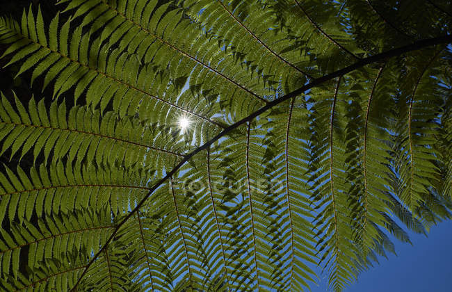 Close up of fern leaf in backlight — Stock Photo