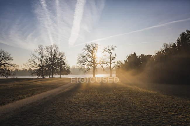 Німеччина, Міжнародний конгрес, Потсдам, парк з деревами у ранковому світлі — стокове фото