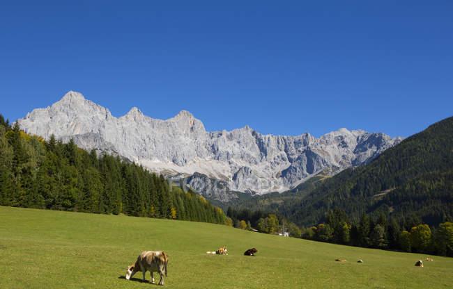 Австрія, Зальцбург держава, Філіцмос, Хахау, альпійська лука, вид на Дахштайн, гірський масив Дахштайн — стокове фото