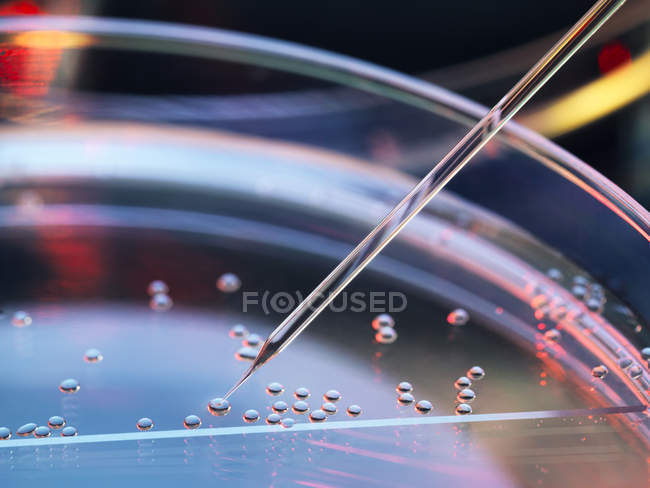 Stem cell research, nuclear transfer being carried out on several embryonic stem cells for cloning — Stock Photo
