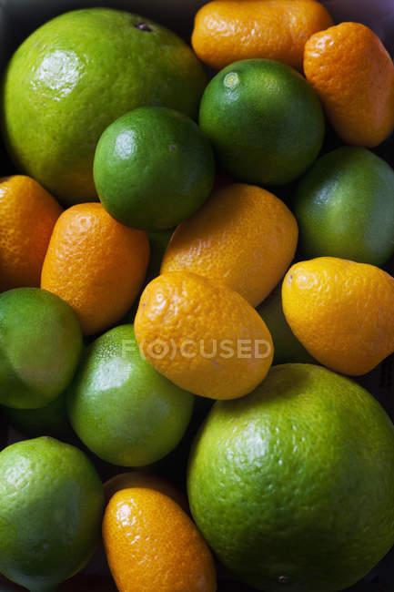 Різні свіжі стиглі Цитрусові фрукти в купі — стокове фото