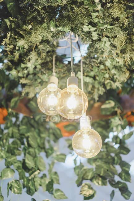 Three shining lightbulbs and plants hanging in yard — Stock Photo