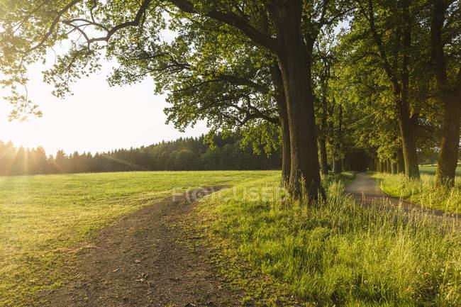 Austria, Alta Austria, Klam, camino de campo vacío al atardecer - foto de stock