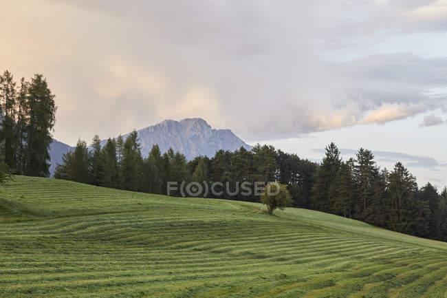 Autriche, Tyrol, Plateau Mieming, prairie fauchée après le coucher du soleil — Photo de stock